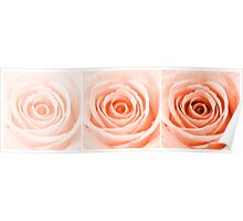 Orange Rose with Water Droplets Triptych Poster