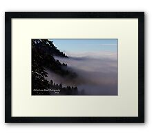 Where The Fog Meets The Trees Framed Print