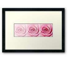 Pink Rose with Water Droplets Triptych Framed Print