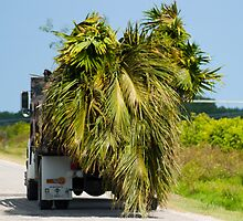 Palm Trees Go for a Ride by Henry Plumley
