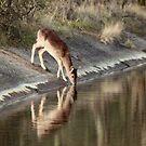 Fallow Deer 3270 by DutchLumix