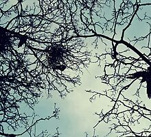 Tangled Crows Nest by duatsky