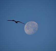 The Moon And The Bird II - La Luna Y El Pájaro by Bernhard Matejka