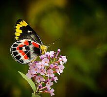 Butterfly Bush by Emma  Gilette