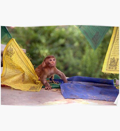 Baby Monkey Playing on Prayer Flags Swayambhu Steps Poster