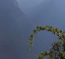 Bamboo and Morning Mist near Tatopani by SerenaB
