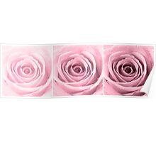 Plum Rose with Water Droplets Triptych Poster