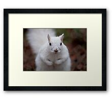 Look into my eyes... Framed Print