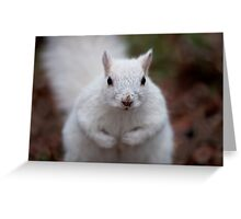 Look into my eyes... Greeting Card