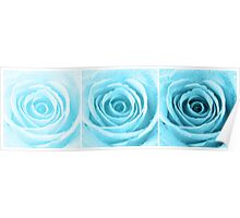 Turquoise Rose with Water Droplets Triptych Poster