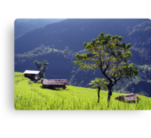 Bright Green Rice Field Nepal Canvas Print