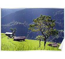 Bright Green Rice Field Nepal Poster