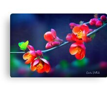 Painted Quince Blossoms Canvas Print