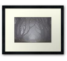 Dark Hedges in the Mist Framed Print