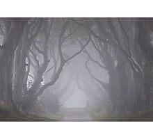 Dark Hedges in the Mist Photographic Print