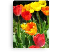 Tulips  Canvas Print
