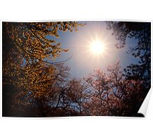 Sunlight and Cherry Blossoms - Brooklyn Botanic Garden Poster