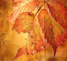 Last Year's Bramble Leaf with Old Rust .. by Mike  Waldron