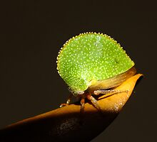 Texas Tree Hopper by Bill Morgenstern