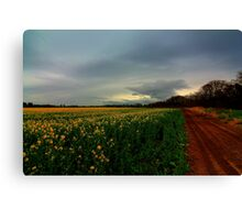 Walking Home along the Teesdale Way trail, North England. April Evening. Canvas Print