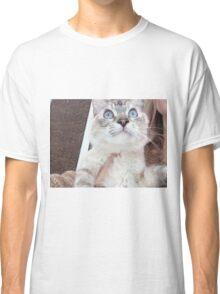 kitten cat Classic T-Shirt