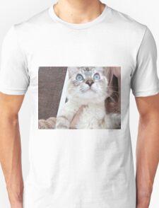 kitten cat T-Shirt