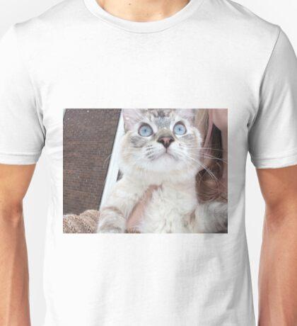 kitten cat Unisex T-Shirt