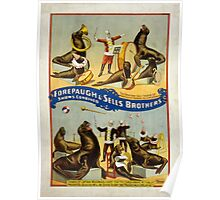 1899 Forepaugh & Sells Brothers Seal and Sea Lion Troupe Poster Poster