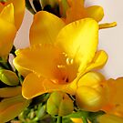 Freesia by bubblehex08