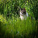 Wild beast by Ikrus