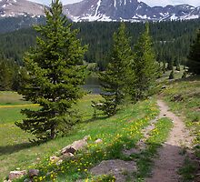 The Path to the Lake by Lucinda Walter