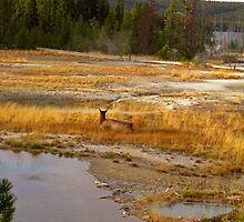 An evening in Yellowstone by Erykah36