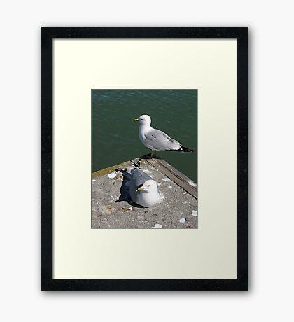 Love Gulls Framed Print
