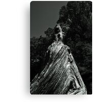 Great Cypress Knee Canvas Print