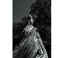 Great Cypress Knee Photographic Print