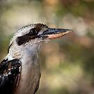 Kookaburra portrait by Celeste Mookherjee