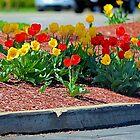 Curbside Garden by Melissa Carlini