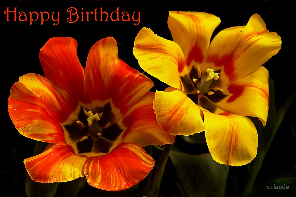 Tulips Happy Birthday Card by cclaude