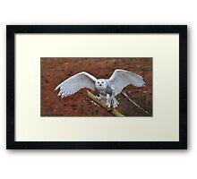 Snowy Wings Framed Print