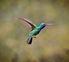 Broadbilled Beauty  by Judy Grant