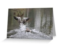 ABSOLUTELY QUACKERS! Greeting Card