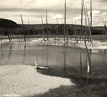 Yellowstone's wrath (black and white) by Erika Price