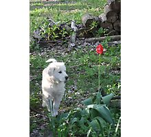 Torro Standing Tall Photographic Print