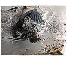 Fishing Is Hard Work, Great Blue Heron in Action Poster