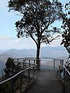 Tree with a view by Kayleigh Walmsley