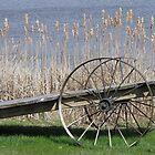 Cat Tails & Wagon Wheels by nikspix