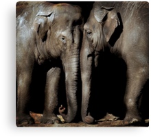 Friends of old Canvas Print