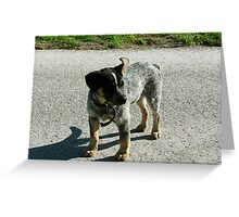 Fearless Amish Dog Hanging Out in the Road Greeting Card