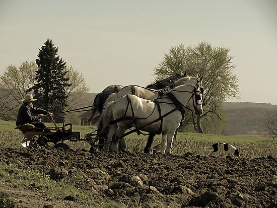 Tilling the Fields by Nevermind the Camera Photography