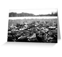 Lillies - Lennox Head Greeting Card